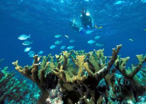 Barbados: The Ultimate Travel Experience